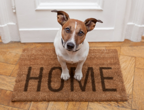 Tips to Help Selling Homes with Pets