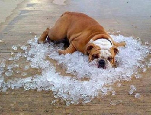 Heatstroke and Your Pets