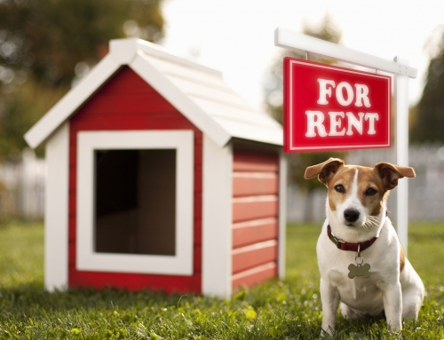 Should Your Rentals be Pet Friendly?